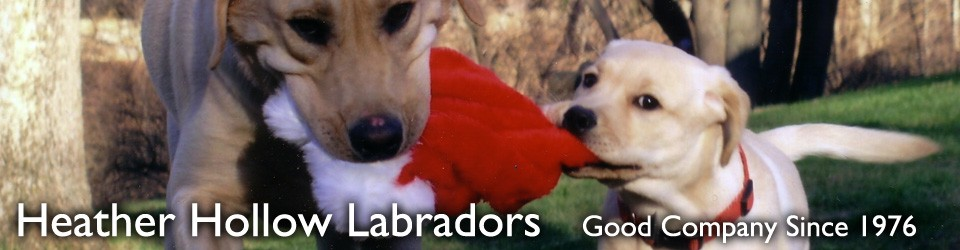 Heather Hollow Labradors